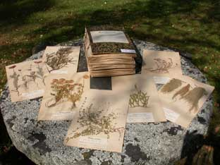 En del av doktor Henrikssons herbariesamlingar.