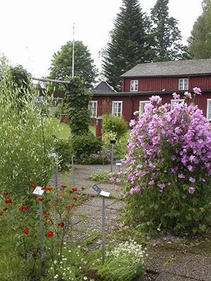 Örtagården i Brunnsparken, Dals Rostock.