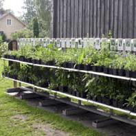 Plantor till salu