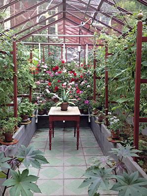 Växthuset inne