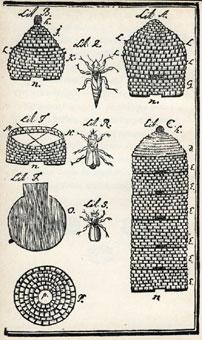 Carl von Linnés bror Samuel betydde mycket för den svenska biskötseln. Hans metoder var normgivande ända fram till den moderna biodlingen.