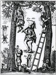 Sedan urminnes tider har vi lagt beslag på binas honung. Här ett gammalt träsnitt som visar olika metoder att skatta honungen från bin i ihåliga trädstammar.