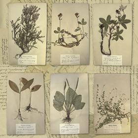 Växtförteckning