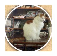 Katten Fridolf finns i atejlén. Det kan vara bra att veta om någon är allergisk.